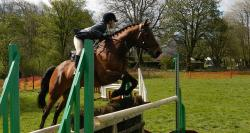 horse, rider, show, jumping