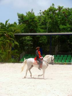 horse, show, riding, man, dominican, republic, exotic