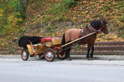 horse, transportation, autumn, carriage, animal, fall
