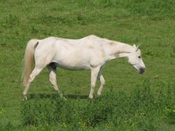 horse, white, mare, foal, meadow, grass, animal, horses