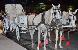 horses, horse drawn carriage, mold, tourism