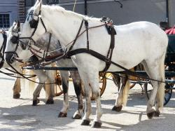 horses, mold, tableware, horse drawn carriage, tourism