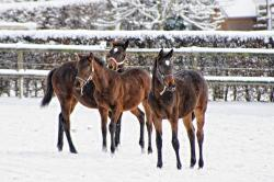 horses, pets, wintry, snowy, snow