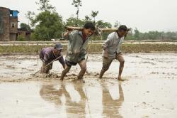 human efforts, men at work, mud, seeding, water