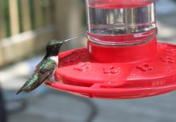 hummingbird, bird, bird feeder