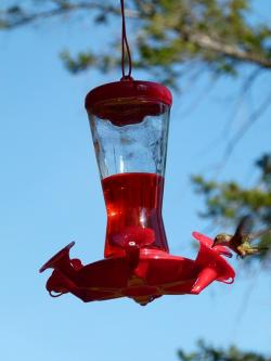hummingbird, feeding station, bird, animal, canada
