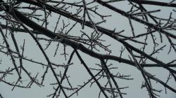 ice, branches, trees, winter, landscape, cold, nature