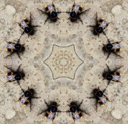 insects, bumblebee, kaleidoscope, ring, circle, dancer