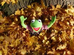kermit, green, frog, leaf piles, cheer, hurray, great