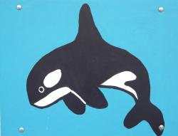 killer whale, orcinus orca, wal, dolphin, delphinidae