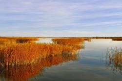 lake, water, sky, landscape, autumn, reeds, beauty
