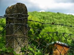 landscape, fence, colors, wood, forest, sunny, spring