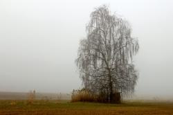 landscape, meadow, fog, haze, tree, birch, autumn