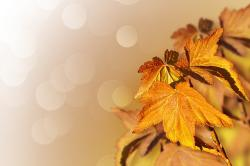 leaves, background, autumn, yellow, golden