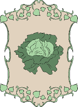 lettuce, garden, vegetable