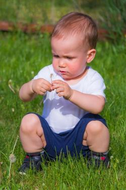 little boy, kid, boy, child, garden, grass, plays