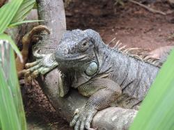 lizard, branch, animals, nature, life, animal world