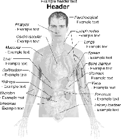 lower, science, diagram, drawing, man, male, adult