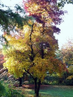 maple, autumn, landscape, mood, fall color, emerge