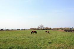 meadow, natural, pony