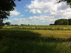 meadow, nature, sky, shadow, still life, green