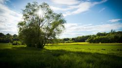 meadow, spring meadow, tree, landscape, nature, land
