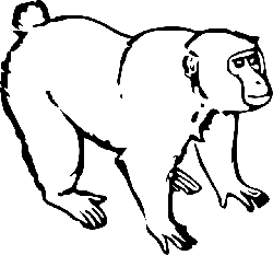 monkey, black, outline, drawing, white, ape, line