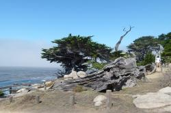 monterey, coast, trees, scenery, water, pacific