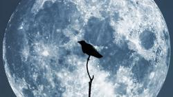 moon, crow, sky, night, blue, glowing, collage