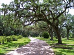 moss, spanish moss, mossy, trees, path, road, nature