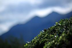 mountain, shrub, plant, sheet, green, landscape, nature