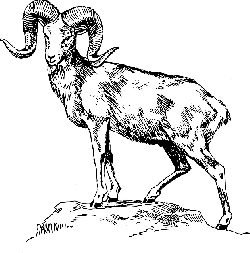 mountain, standing, horns, fur, wild, animal, mammal