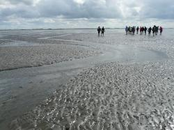 mudflat hiking, priel, hike, wadden sea, ford, personal