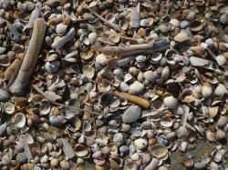 mussels, north sea, beach
