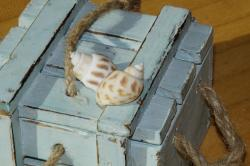 mussels, snail shells, box, maritime, decoration, deco