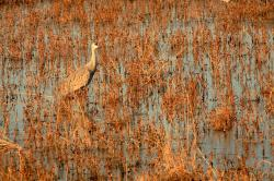 nature, bird, swamp