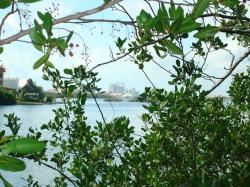 nature, green, plant, plants, sea, laguna, tree