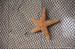 network, starfish, sea