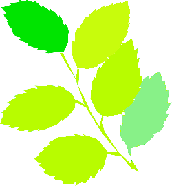 new, simple, leaf, tree, cartoon, spring, branch, free