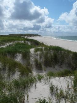 north sea, dunes, sylt, beach