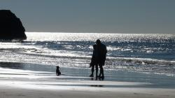 ocean, beach, water, back light, silhouette, human, dog
