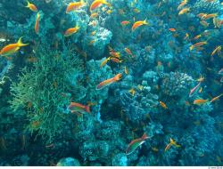 ocean life, under water, colorful, fish, corals, sea