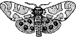 open, cartoon, bug, wings, insect, moth, moths, top