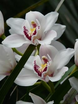 orchid, white, flower, plant, tropical, exotic