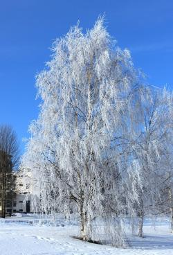 oulu, finland, winter, snow, frost, sky, clouds, nature