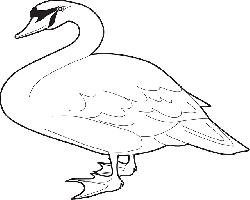 outline, bird, wings, long, goose, neck, animal