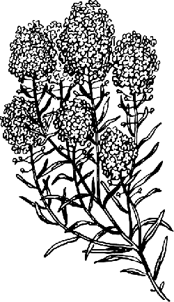 outline, flower, plant, botany