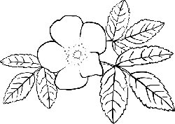 outline, plants, flower, flowers, rosa, plant