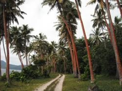 palms, path, road, palm tree, tropical