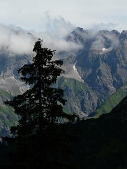 panorama, alpine, mountains, mountain, tree, fir